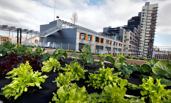 The program and design of the Via Verde Housing Project in NYC was centered around healthy living bolstered by aesthetics. Units and courtyards have unprecedented light, air, and nature compared to typical US public housing; and the building features a health club and community gardens. (Image Credit: Ángel Franco / The New York Times)